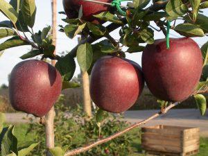 Jeromine fruits 14-09-2005